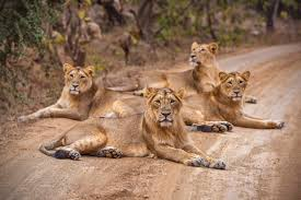 Gir wildlife.jpg